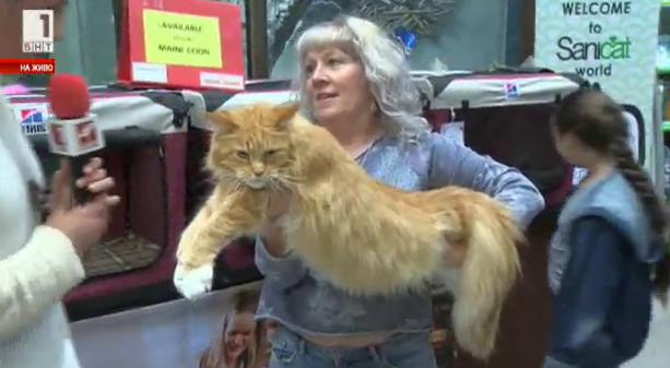 Котешки отличници