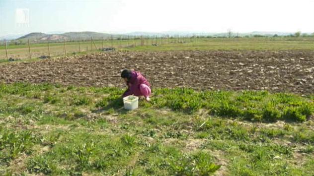 Проблемите пред производителите на био храни в България