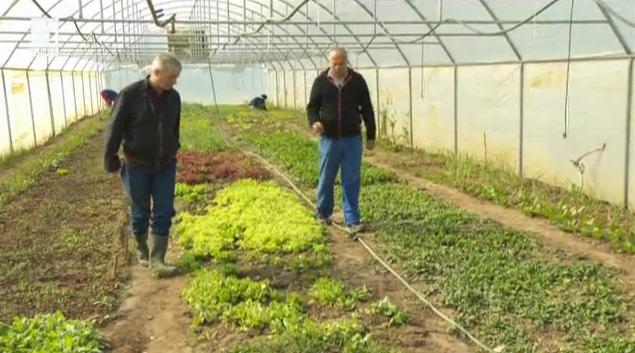 Как работят и живеят хората, които отглеждат чиста храна в България?