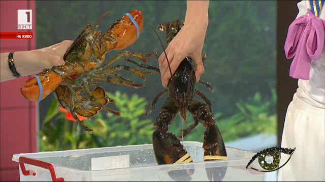 Омарите - най-скъпите обитатели на моретата