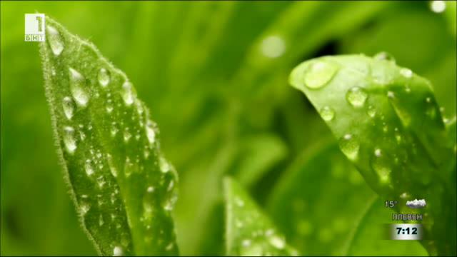 Тайният свят на растенията