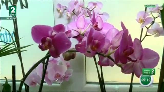 Растенията, които пречистват дома от токсини
