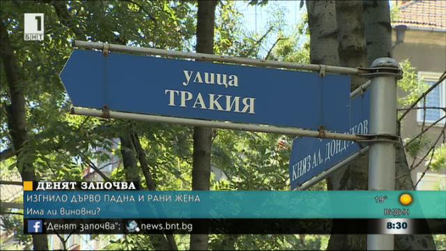 Кой е виновен за инцидентите с падащи дървета в София
