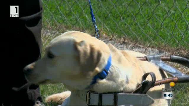Законът и ние: Равни права за хората с кучета асистенти и хората с кучета водачи