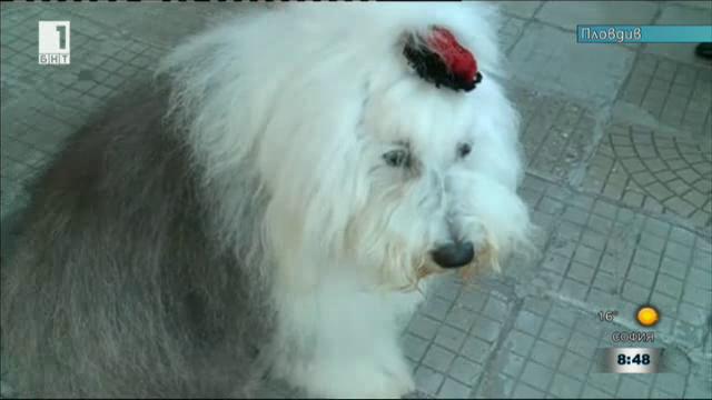 Кучето, което посреща първолаци