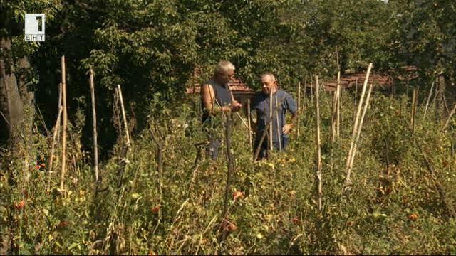 На гости в градината на журналиста Григор Малинов