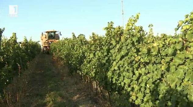 Румъния – пета в производството на грозде в Европа