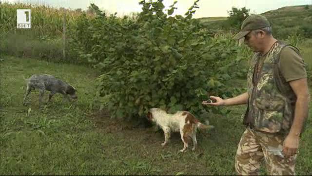 На лов за трюфели в съседна Румъния