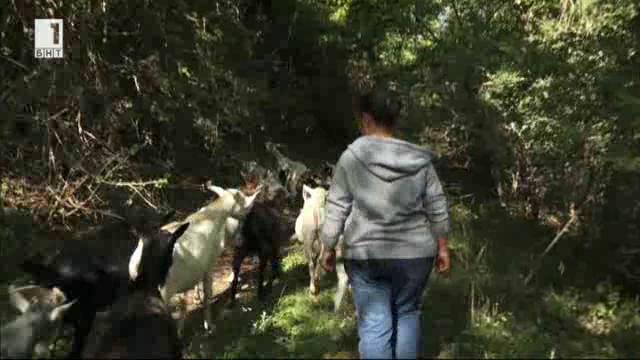Историята на Светлана Николова, която говори с козите на тайствен език