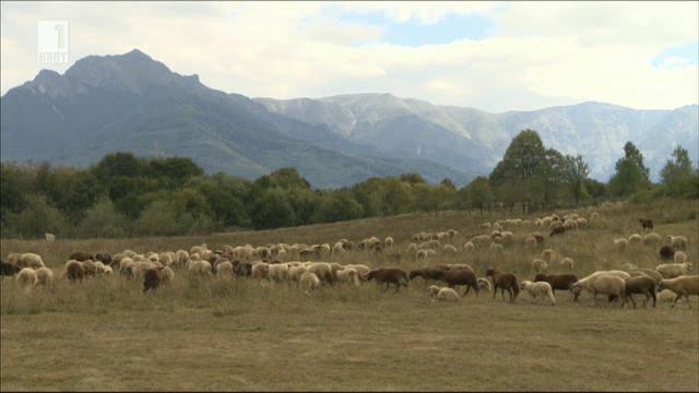 Оптимистична история за животновъдството в Троянския Балкан