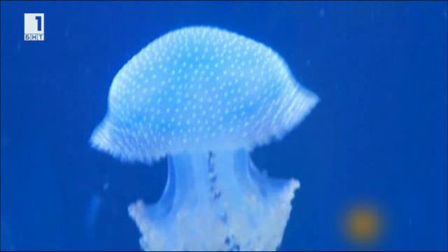 Спят ли медузите?