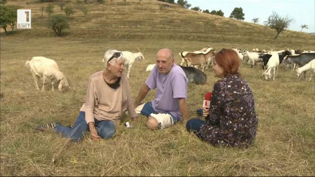 Какъв е вкусът на козето био мляко в една семейна ферма в село Лесидрен