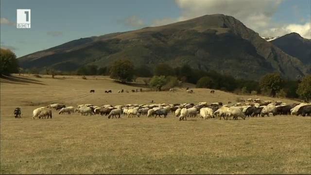 Битката за пасища на местните фермери от Калоферския Балкан