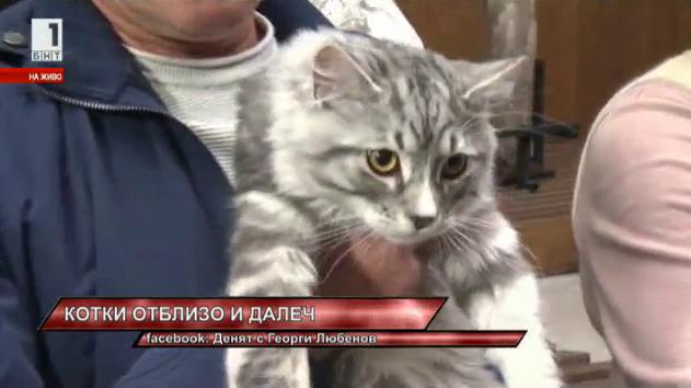 Международното изложение на котки в Националния музей Земята и хората