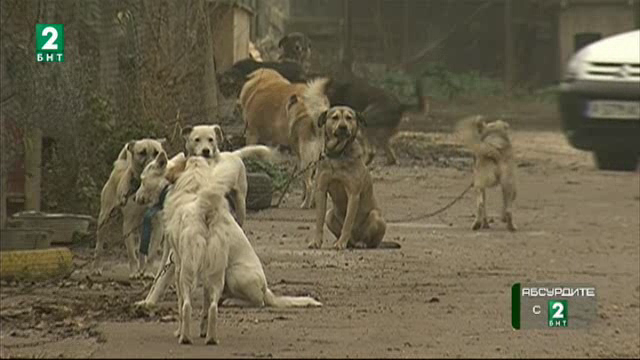 Жена от с. Бръшлян отглежда 30 кучета в двора си