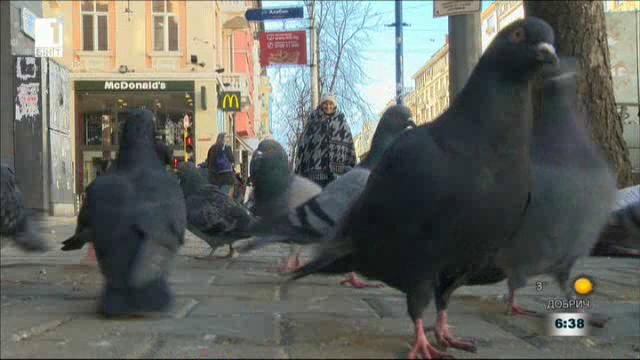 Пазителката на гълъбите - история за надеждата