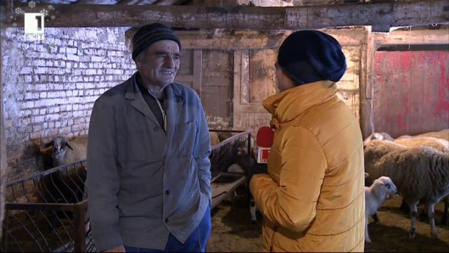 В планинската ферма на Наньо и Галя Стайкови в село Скорци