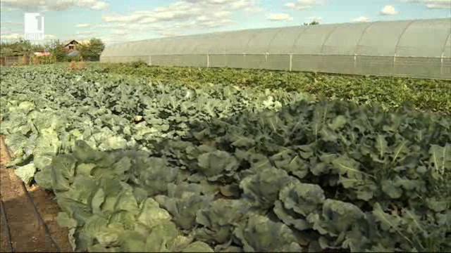 Потомствени земеделци два века пазят българските традиции в Букурещ