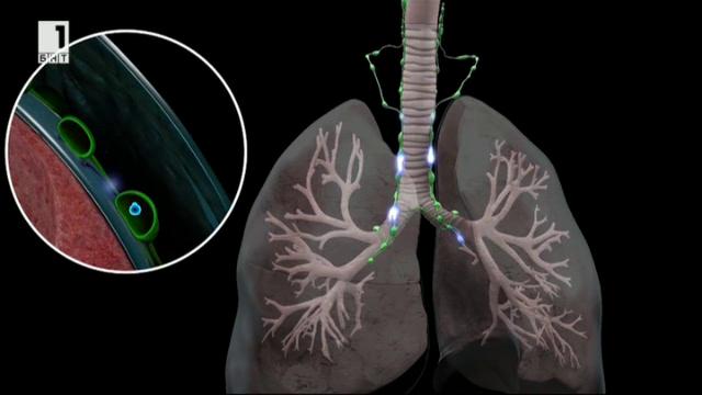 Какво не знаем за лимфната система