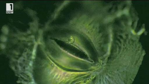 Ако растенията можеха да говорят