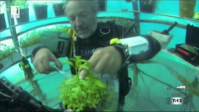 Подводни оранжерии