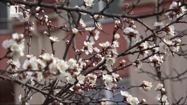 Пролетен бал на СГБ