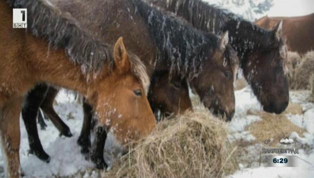 Субсидия за конете от Осогово
