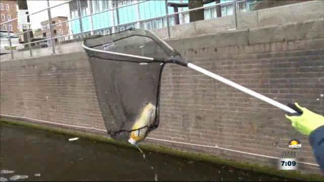 На лов за пластмаса по каналите на Амстердам