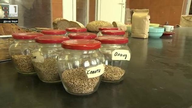 Възраждане на старите нископродуктивни сортове пшеница