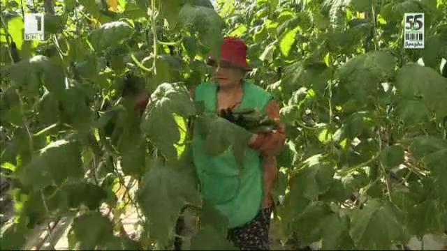 Как български оранжерии борят задграничната конкуренция