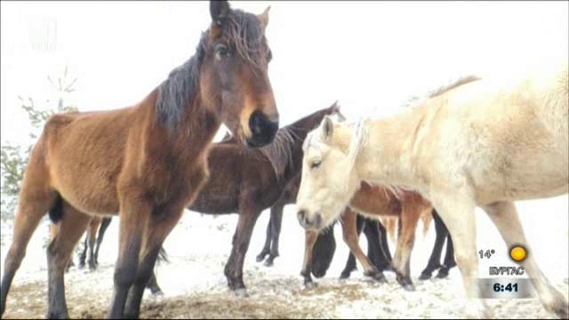 Първо опитомяване на дивите коне