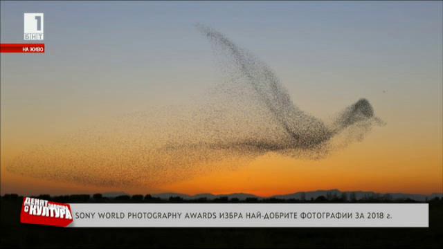 Sony World Photography Awards избира най-добрите фотографии за 2018 година