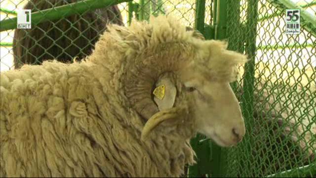 Най-интересното от Националното животновъдно изложение в Сливен