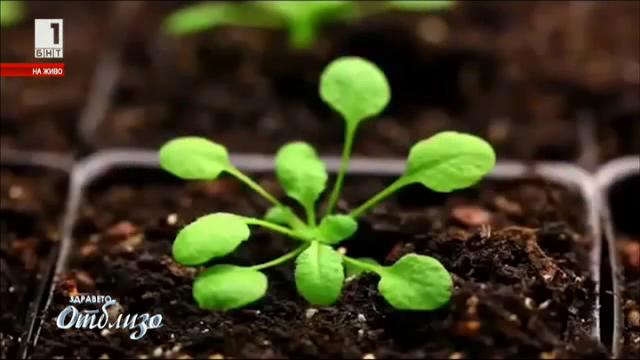 Ботаническа революция