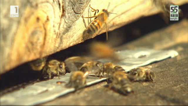 Субсидиите за биопчеларството