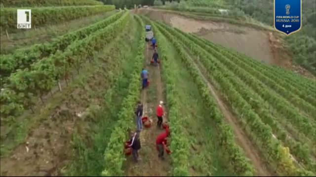 Забележителен ръст на биоземеделието в България