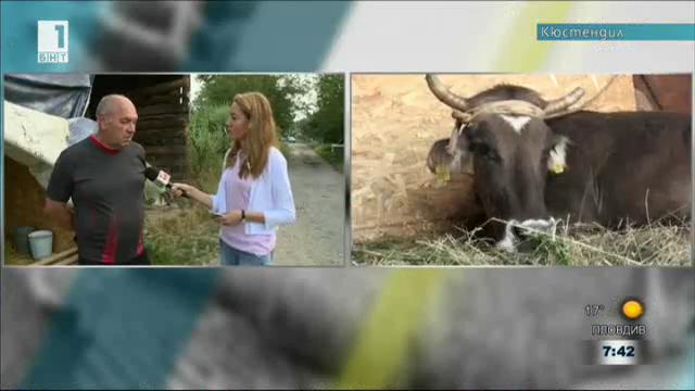 Кравата Пенка очаква гости от Европарламента