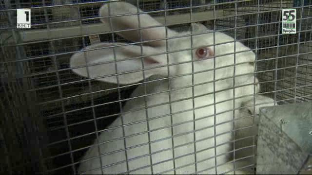 Семейна ферма за зайци