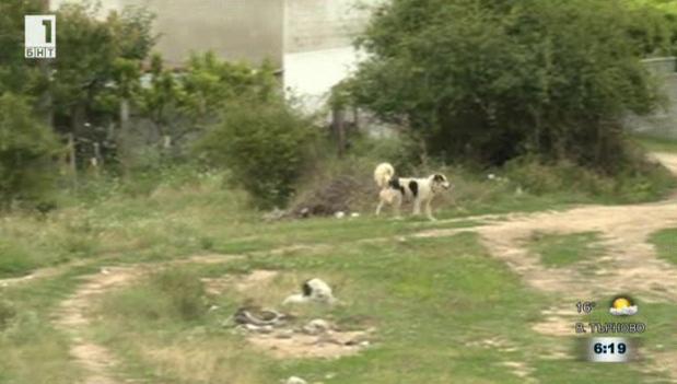 17 бездомни кучета са изхвърлени край село Стара Кресна