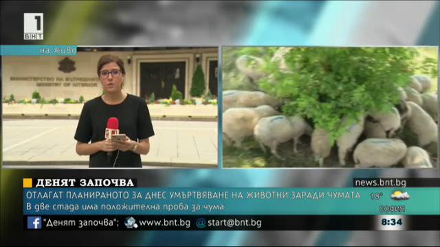 Отлагат планираното за днес умъртвяване на животни заради чумата