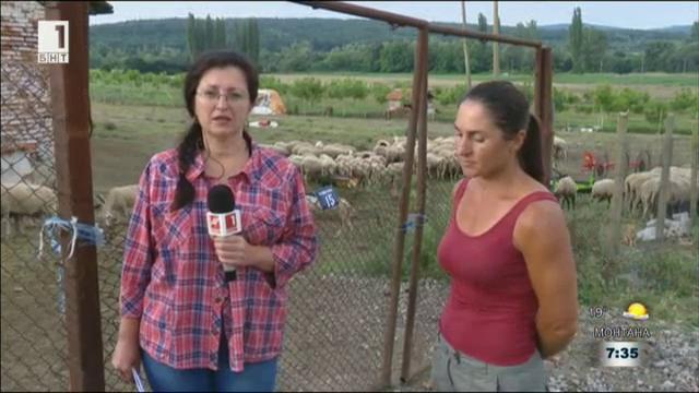 В Болярово се съмняват в пробите за чума по дребния добитък