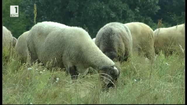Знаем ли истината за търговията с животни и месото от тях