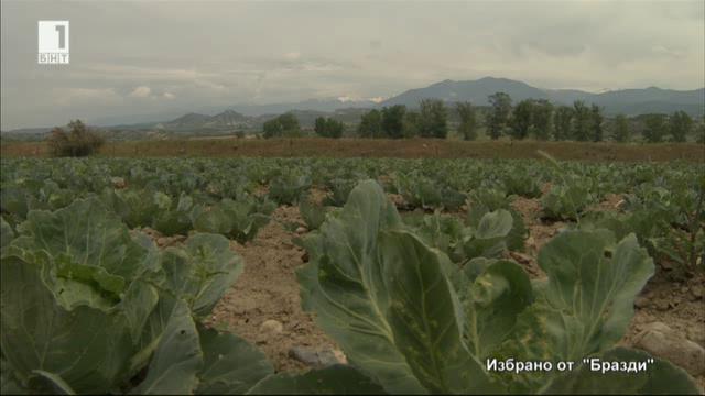 Избрано от Бразди: Как се отглеждат био зеленчуци
