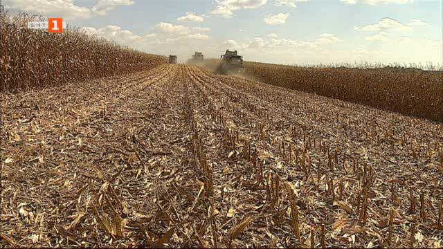 Председател на фермерска организация за тазгодишната есенна жътва