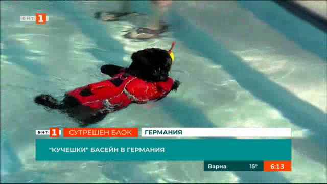 Кучешки басейн в Германия