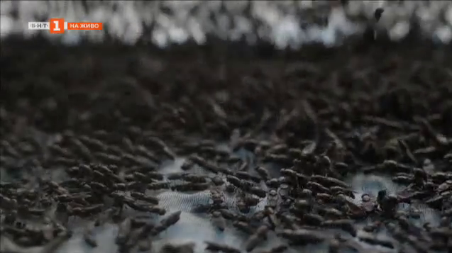 Как мухата може да бъде полезна
