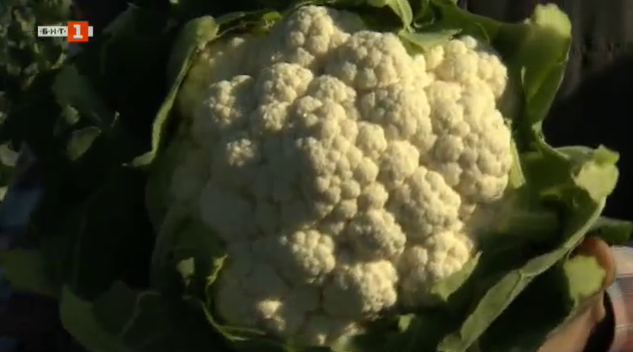 Зеленчуци от Пловдивското поле