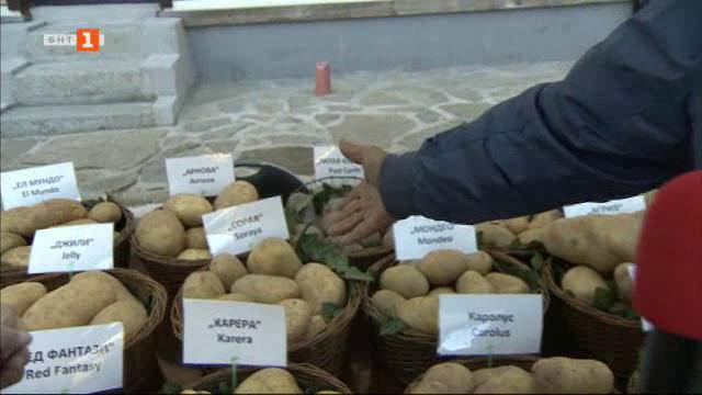 За първи път празник на картофа в Копривщица