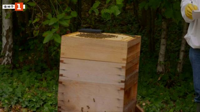 Изкуствен интелект би могъл да спаси пчелите от изчезване