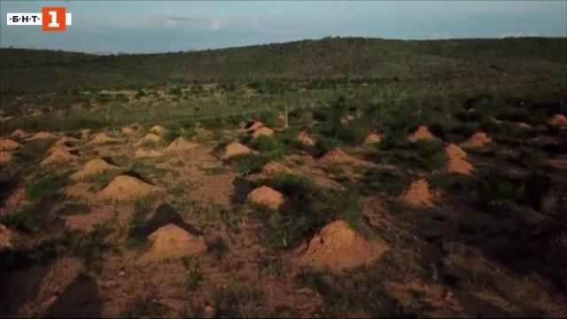 Могили, изградени от термити